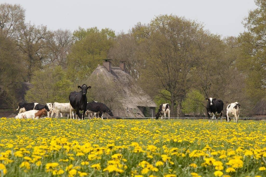 Museumdorp Orvelte - Fietswandelvakantie.nl