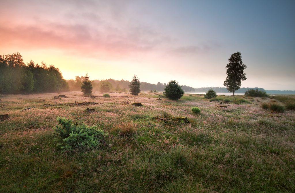 Nationaal Park Dwingelderveld - Fietswandelvakantie.nl